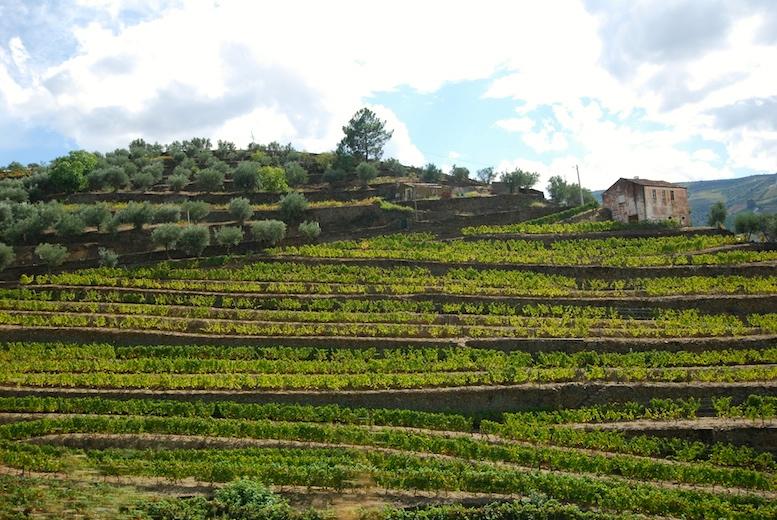 Douro hillside