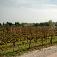 Portuguese wine region - Setubal