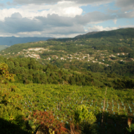 Portuguese wine region - Vinho Verde