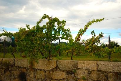 old vineyards of the Casa da Calçada