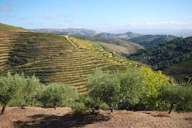 The landscape of the Quinta Vale d'Aldeia