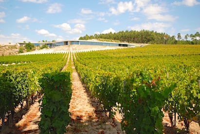 The vines of the Quinta de Lemos