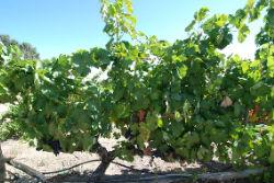 Discover Portuguese wine videos