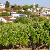 Discover Tejo Wines