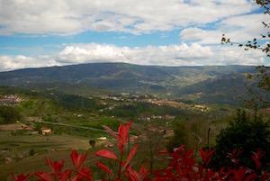 Vinho verde landscape